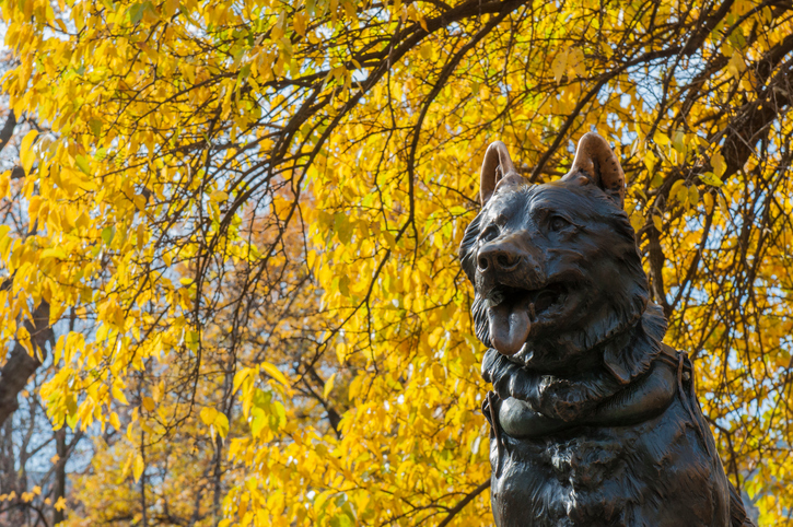 [A] What is the name of the famous dog statue in New York City's Central Park?